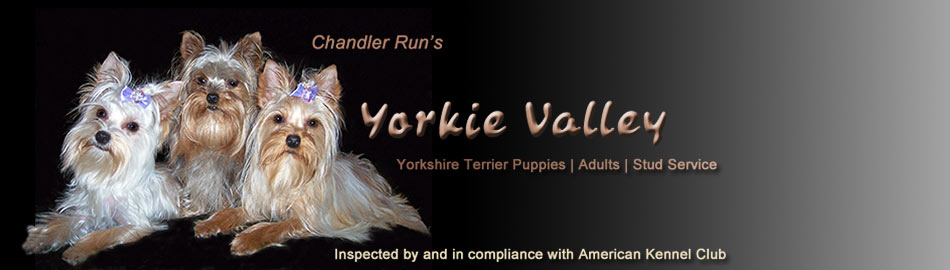Yorkie Valley
