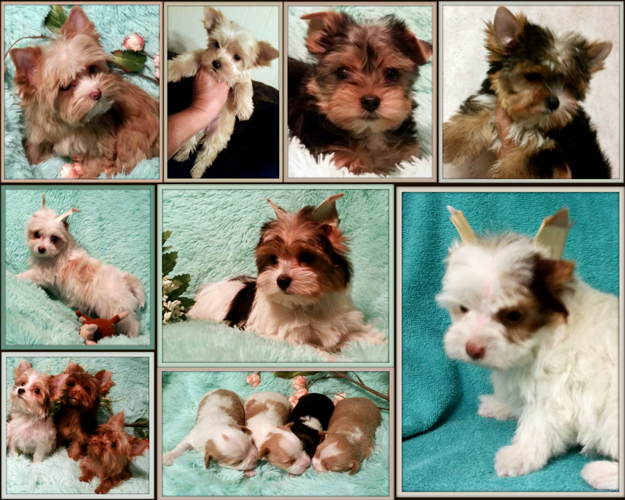 sold puppies